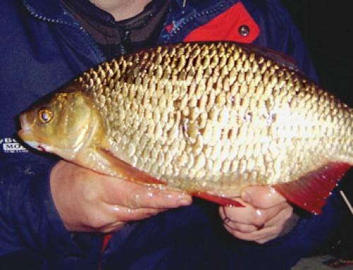 Gäddfiske på dagen och sarvfiske på kvällen