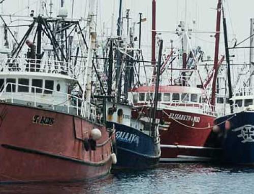 Kryphål i EU:s fiskeregler ska täppas till