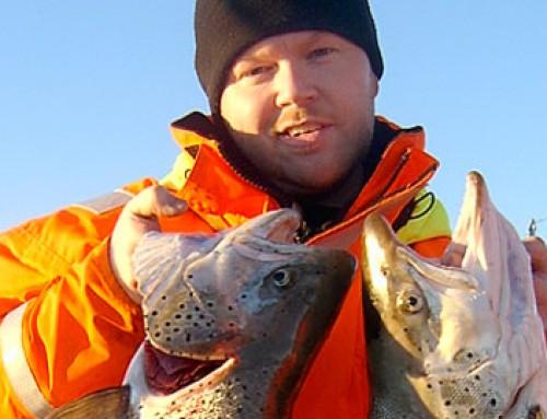 Fantastiskt öringfiske; två över 7,5 kilo