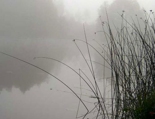 Dimmig morgon – och lugn fiskedag