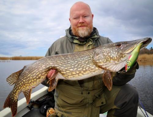 Gäddfiske med Peto – den finska besten